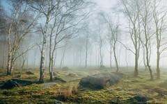 Peak District Morning IV (J C Mills Photography) Tags: peakdistrict derbyshire woodland rocks trees birch mist fog winter landscape