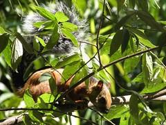 Squirrel (Bruja Camilla) Tags: squirell animals wildlife