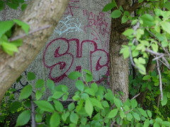 Overschie - SHC (oerendhard1) Tags: graffiti streetart urban art rotterdam oerendhard tunneltje underpass overschie vandalism illegal throw ups tags shc surch