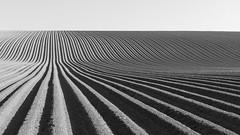 Tattie Field Mono (captures.in.time) Tags: black white mono potato field landscape blackandwhite landscapephotography fife scotland