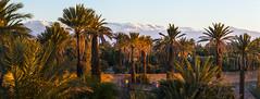 L'Atlas vu depuis Skoura (© Laurent Sicard Photographie) Tags: 6d canon panorama panoramic panoramique sunrise nature landscape paysage stitched maroc morocco skoura atlas mountain montagne