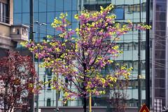 Primavera_Gioia (Comune di Milano) Tags: primavera melchiorregioia alberi
