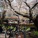 Bike and flowers at Nikaryoyosui