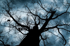 Motionless Tree (Nicholas Erwin) Tags: tree emotion moody spooky cloudy silhouette contrast sky couds nature outside outdoors branches naturephotography scary fujifilmxt2 fujixt2 xf1024mmf4rois fuji1024 xf1024 waterbury vermont vt unitedstatesofamerica usa america fav10 fav25