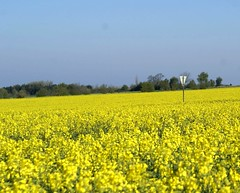 Rape seed fields (Jaedde & Sis) Tags: raps mark rape seed field yellow sign