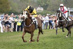 DSC_0755 (michael_walton1) Tags: nikon d500 sigma 150600c 55300 eytononsevern horse horseracing horses pointtopoint p2p