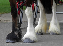 Four Legs (rozwilkinson) Tags: horse legs