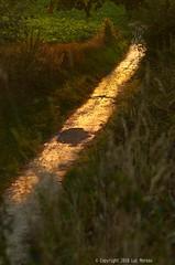 Autumn is Coming (Spotmatix) Tags: belgium brabantwallon camera countryside k5iis landscape pentax places seasons summer sunset villerslaville