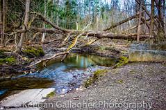 Mill Creek (keegsley) Tags: mill creek summit erie pa pennsylvania nature headwaters park landscape water rock woods