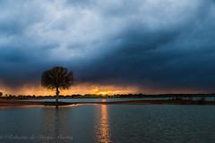 Viendo la tormenta pasar. (Roberto_48) Tags: ngc arbol solitario tormenta puesta sol lago sunset storm nubes dramatico cielo