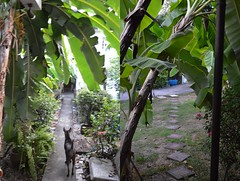 view from our backdoor and side porch (the foreign photographer - ฝรั่งถ่) Tags: view backdoor porch our house bangkhen bangkok thailand nikon