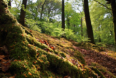 Temperate Rainforest Series (PJ Swan) Tags: temperate rainforest trees cumbria england derwent water green leaves
