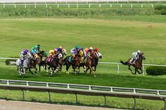 Race 5 - first pass (avatarsound) Tags: boston suffolkdowns horse horseracing horses jockey jockeys race racetrack racing rider riding sport