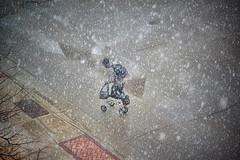 rapidly through the snow (Brian Kermath (e.h.designs)) Tags: universityofwisconsinoshkosh oshkoshwisconsin oshkosh wisconsin snow snowing snowfall snowstorm winter winterstorm latewinterstorm people man person parkinglot shadow kneescooter scooter injury injured sidewalk