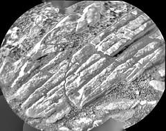Rocks on the Floor, variant (sjrankin) Tags: 26april2019 edited nasa closeup grayscale panorama msl curiosity galecrater mars rocks sand