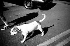 dog and grills (gato-gato-gato) Tags: 35mm contax contaxt2 iso100 ilford ls600 noritsu noritsuls600 strasse street streetphotographer streetphotography streettogs t2 analog analogphotography believeinfilm film filmisnotdead filmphotography flickr gatogatogato gatogatogatoch homedeveloped pointandshoot streetphoto streetpic tobiasgaulkech wwwgatogatogatoch black white schwarz weiss bw monochrom monochrome blanc noir strase onthestreets mensch person human pedestrian fussgänger fusgänger passant schweiz switzerland suisse svizzera sviss zwitserland isviçre zuerich zurich zurigo zueri autofocus