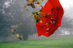 Umbrella in winter haze (DrawfulMind) Tags: umbrella winter leaves trees haze mist fog