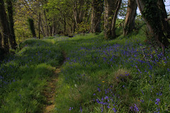 Woodlands by River Bann at Ballycashone (John D McDonald) Tags: ballycashone ballycoshone iveagh countydown codown down southdown northernireland ni ulster geotagged nikon d3300 nikond3300 landscape woods woodland woodlands trees deciduous bluebells