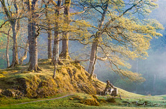 Spring Light, Elterwater (colinbell.photography) Tags: