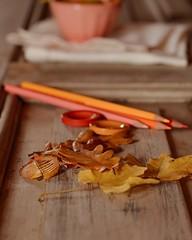 Otoño... (Irene Carbonell) Tags: otoño montevideo colores colorespastel hojasdeotoño nikon