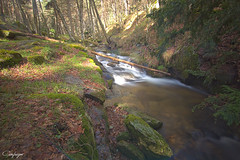 Lost in Canencia...116/365 (cienfuegos84) Tags: naturaleza nature agua water río river tree arbol stone