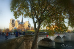 Pont de l'Archevêché (marko.erman) Tags: notredame paris france cathedral church monument architecture beautiful seine river sunny sun automn sony people popular pov saintlouis iledelacité pontdel'archevêché archbishopsbridge unesco worldheritage
