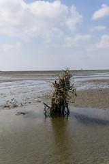Cuxhaven (Michael Franze) Tags: 30mm sigma contemporary ilce6000 a6000 sony alphanatur landschaft nordsee watt wasser meer