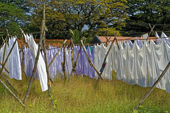 _MG_7438_DxO (carrolldeweese) Tags: dhobi khana wash fortkochi kerala india