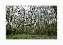 _green_energy (fot_oKraM) Tags: wald baum trees woods forest electricity pylon strommast freileitung freileitungsmast natur nature nrw muensterland westfalen