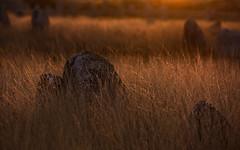 Carnac (Faouic) Tags: france bretagne morbihan carnac ménec alignements menhirs préhistoire coucherdesoleil mégalithes