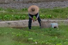 _5ND7381_LR_LOGO (Ray 'Wolverine' Li) Tags: hongkong farming farm citylife asian hongkonglife farmer asiafavorites happyplanet