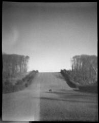 Allée (LowerDarnley) Tags: churchiesofficialspycamera plasticcamera toycamera 127film ipswich ma craneestate allee walkers trees lawn lightleaks