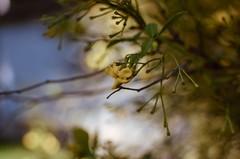 Otoño difuso... (Irene Carbonell) Tags: otoño nature naturaleza bokeh flores montevideo