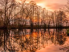 Sunset on the Spree (Steppenwolf33) Tags: sunset spree neuzittau reflexions longexposure steppenwolf33 tree forest sky
