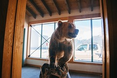 Drs. Appt. - 016. (i threw a guitar at him.) Tags: alaska spring 2019 april fly aerial view photo skagway southeast south east seaplanes sea plane bush travel airport building stuffed bear brown grizzly dead glass display welcome