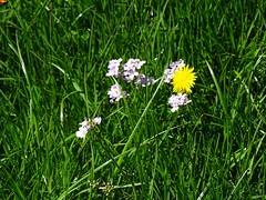 """Frühling im Rottal – Naturidylle in Oberschwaben (warata) Tags: 2019 deutschland germany süddeutschland southerngermany schwaben swabia oberschwaben """"upper swabia"""" """" schwäbischesoberland"""" """"badenwürttemberg"""" badenwuerttemberg rot """"rot der fluss"""" river rottal landschaft landscape """"sony dschx400v"""" frühling spring nature outside garden"""