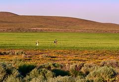D0PM-PAN00317 (Roy Prasad) Tags: leica 90mm apo summicron panasonic s1r poppy flower antelope california prasad royprasad wildflower spring landscape nature