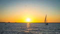 Lake, Boat, and Seagull (yarnim) Tags: landscape sunset lake eerie water waterfront sailboat boat aquatic horizon sun sky ohio cleveland lakeeerie greatlakes us nature sony a7m3 a7iii sel55f18 carlzeiss zeiss prime