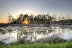 IMGL7495_6_7HDR_Hiller Moor (HDRforEver) Tags: hille hdr hdrbilder hdrfoto karstenhöltkemeier canon 5dmark3 5dmarkiii 5d eos sunset sonnenuntergang water 2018 reflexions reflektionen new interesting