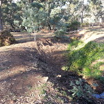 "English Ivy removal drain ditch 20190425_153705 <a style=""margin-left:10px; font-size:0.8em;"" href=""http://www.flickr.com/photos/61627737@N03/33842861798/"" target=""_blank"">@flickr</a>"