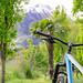 Bike | Fahrrad | Palmen | Berge mit Schnee | kontrastreich | Südtirol | Bike | Mountainbike
