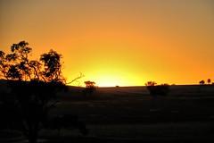 Sunday sunrise. (Ian Ramsay Photographics) Tags: cumnock newsouthwales australia sunday sunrise skies centralwestern yellow trees morning light