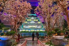 Japanese Spring In The Bellagio (Richard Melton) Tags: bellagio las vegas nevada trees shrine spring conservatory botanical garden