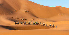Take the C Train (Trouvaille Blue) Tags: africa morocco maroc ergchebbi camels dunes sand tourists trouvailleblue