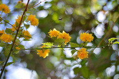 Beauty is Everywhere (Alexandra Horvath) Tags: nature outdoor spring bokeh flower flowers blossom plant branch garden nikon nikond3200 hungary yongnuo