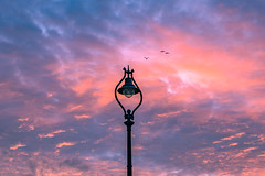 Flight to the light (Gullivers adventures) Tags: sunset lamp street sky light birds clouds unlimitedphotos flickr