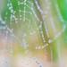 Dewdrop web