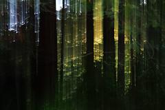 lost (R. Leu - 呂) Tags: olympus omd em5mk2 mzuiko 45mm f18 forest trees micro43 microfourthirds