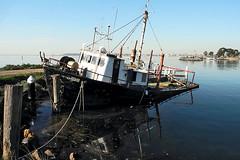 Girt by sea 3 (Girt By Sea) Tags: fishingtrawler sunkenboat oldjetty oldpier coriobay geelong victoria australiancoastline photography