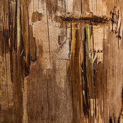 Telephone Pole (mimsjodi) Tags: macromondays eyeofthebeholder macro wood groupchallenge challenge